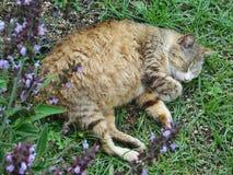 Een kattenslaap in de tuin dichtbij bloemen Royalty-vrije Stock Foto's
