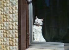 Een kattenslaap die zich dichtbij het venster bevinden Royalty-vrije Stock Afbeelding