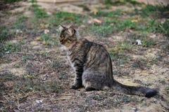 Een kattenverblijf Stock Foto