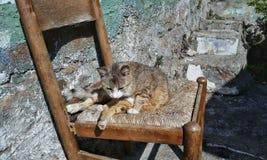 Een kattenzitting op een stoel door de zon wordt verlicht die Royalty-vrije Stock Foto