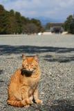 Een kattenzitting voor het Koyto-Paleis Stock Afbeelding