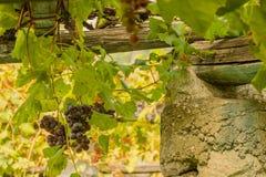Een kenmerkende pylon steen en een kalk van de wijngaarden van Royalty-vrije Stock Afbeeldingen