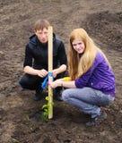 Een kerel en een meisje plantten boom Royalty-vrije Stock Foto's