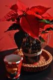 Een Kerstmisster Stock Fotografie