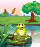 Een kikker bij het meer royalty-vrije illustratie