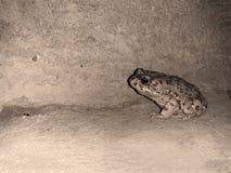 Een kikker binnen buiten huis Royalty-vrije Stock Afbeeldingen