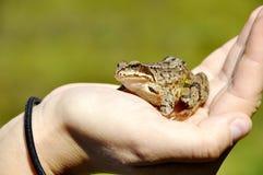 Een kikker in de hand Stock Foto