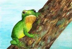 Een kikkerzitting op een boom watercolor Stock Afbeelding