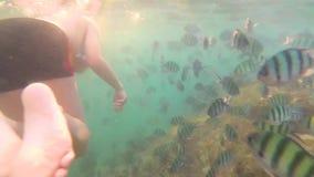 Een kind baadt in het overzees met een vis in de zon Vrij duiken in Maskers Tropisch Eiland stock videobeelden