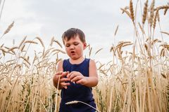 Een kind bevindt zich op een tarwegebied stock foto's