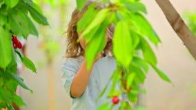 Een kind eet kers van een boom stock footage