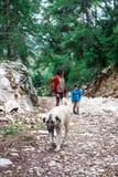 Een kind loopt met mamma en hond in het park stock afbeeldingen