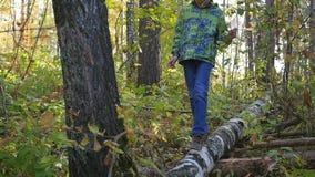 Een kind loopt op een gevallen boom in het de herfstpark stock videobeelden