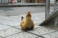Een kip en kuikens op de stoep van de weg Royalty-vrije Stock Afbeeldingen