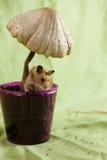 Een Klassiek Gouden Hamsterhuisdier Stock Foto's