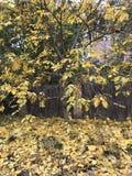 Een klassieke dorpsscène met gouden dalingsgebladerte Royalty-vrije Stock Fotografie