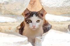 Een klein dakloos katje die in de kelderverdieping leven stock foto's