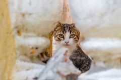 Een klein dakloos katje die in de kelderverdieping leven stock afbeeldingen