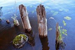 Een klein gebied van het aquatische leven royalty-vrije stock foto's
