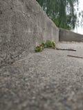 Een klein gras groeit in de oude steenstappen royalty-vrije stock afbeeldingen