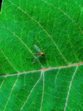 een klein insect op een blad Stock Foto's