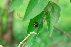 Een klein insect op het blad stock foto's