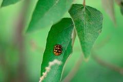 Een klein insect op het blad stock afbeeldingen