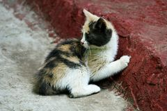 Een klein katje Stock Foto