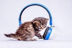 Een klein katje die aan de geluiden van de muziek dichtbij luisteren hij stock foto