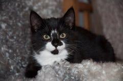 Een klein katje die binnen aan de camera kijken Stock Foto