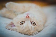 Een klein katje ligt slaap royalty-vrije stock foto's