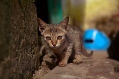 Een klein katje op de straat Royalty-vrije Stock Fotografie
