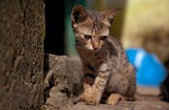 Een klein katje op de straat Stock Fotografie