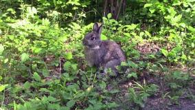 Een klein konijntje in een bos stock video