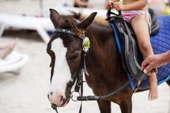 Een klein meisje berijdt een ezel, vakantie op het de zomerstrand stock afbeeldingen