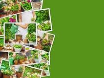 Een klein meisje plant bloemen De jonge tuinman royalty-vrije stock fotografie