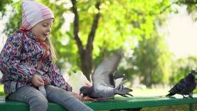 Een klein meisje voedt duiven in een de herfstpark stock footage