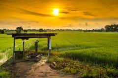 Een klein plattelandshuisje in jasmijnlandbouwbedrijf Stock Foto's