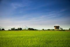 Een klein plattelandshuisje in jasmijnlandbouwbedrijf met duidelijke blauwe hemel Stock Foto's