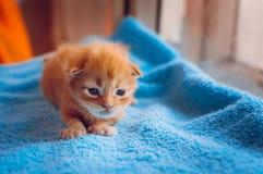 Een klein roodharig katje zit op een blauwe mat stock foto