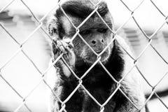 Een kleine aap in gevangenis stock afbeelding