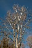 Een kleine beek stroomt trog een low-lying grond Stock Foto's