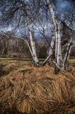 Een kleine beek stroomt trog een low-lying grond Royalty-vrije Stock Fotografie
