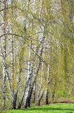 Een kleine beek stroomt trog een low-lying grond stock fotografie