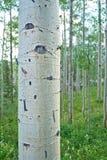 Een kleine beek stroomt trog een low-lying grond Stock Afbeelding
