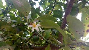 Een kleine bloem in deze grote boom stock foto