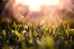 Een kleine bloem komt elke dag Stock Afbeeldingen