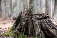 Een kleine boom Stock Foto's