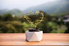 Een kleine boom in de vorm van een hart in de pot op houten lijst stock foto's
