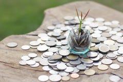 Een kleine boom op het muntstuk, concept in de groei, sparen en investering royalty-vrije stock foto